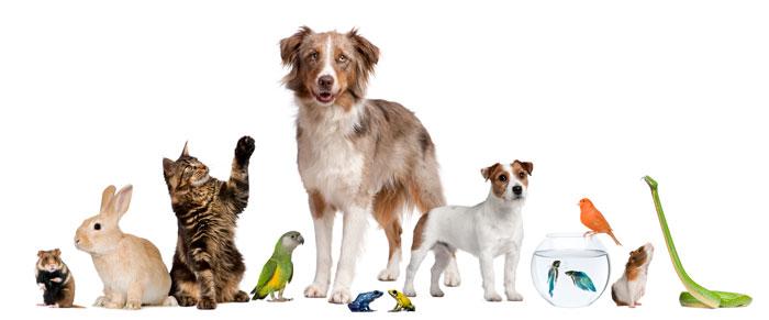 Tiere aus dem Tierheim adoptieren