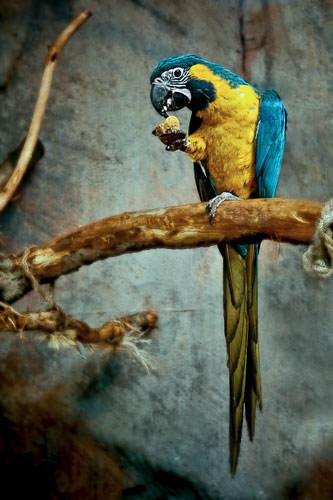 Vogel aus dem Tierheim